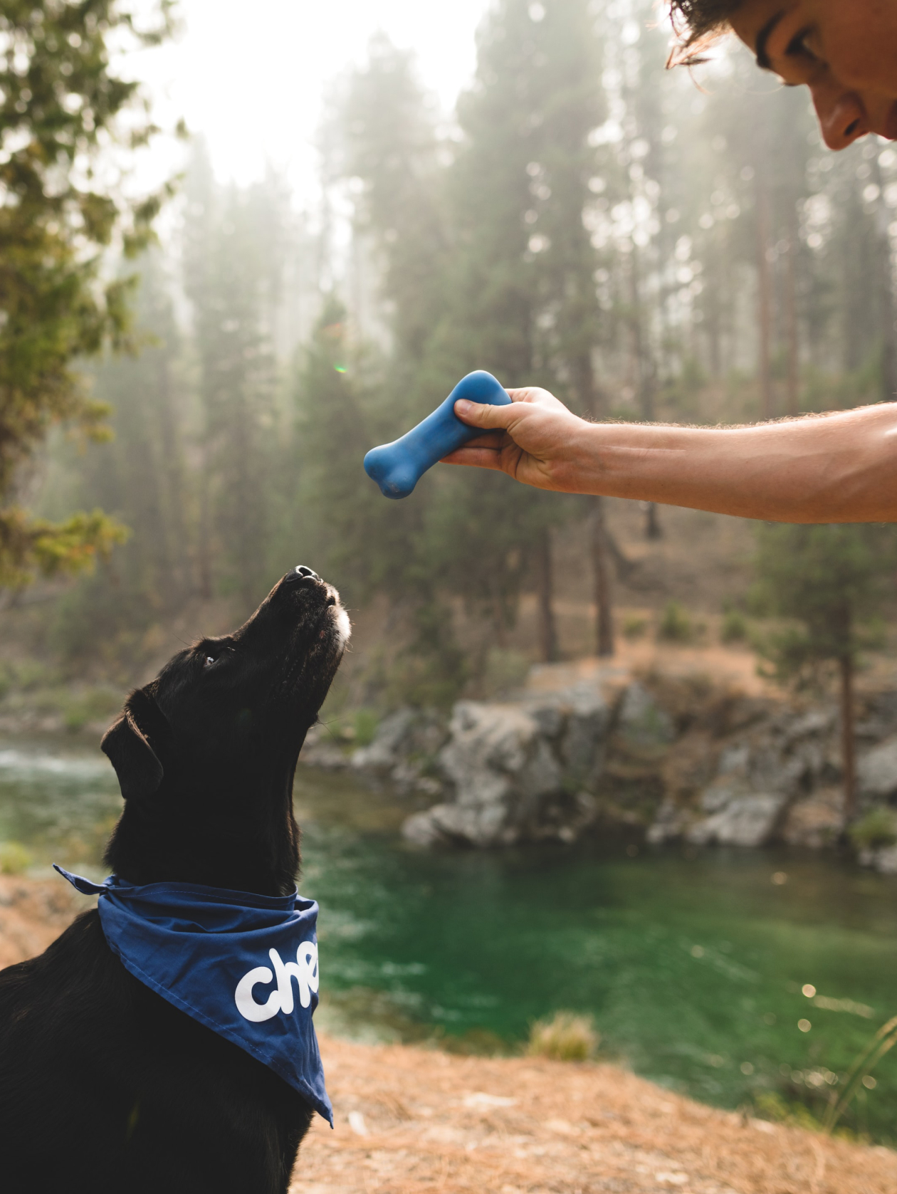 Four reasons to start scent work training with your dog.