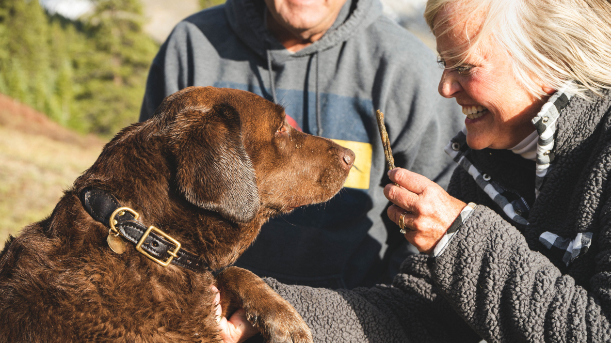 How to select the right kind of dog for your family?